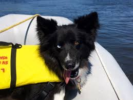 Dogs That Shed Minimally by Cruising Dog Breeds Cruising Anarchy Sailing Anarchy Forums