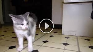 kitty cat kittycat on topsyone box of kitty cats tridanim