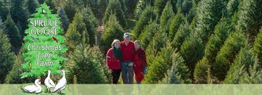 Spruce Goose Christmas Tree Farm Cut Your Own New Jersey Fresh