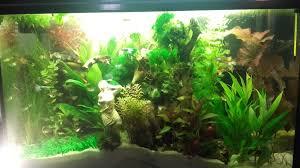 plante artificielle pour aquarium plant mat 3 plante artificielle pour aquarium plantes