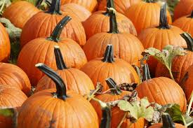 Pumpkin Picking Places In South Jersey by 3 Ways To Get Your Fall Pumpkin Fix In Hunterdon Warr Nj Com
