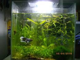 photos d aquarium page 256