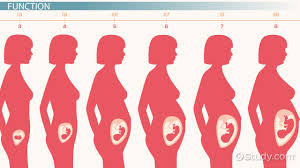 100 thick uterine lining shedding during period signs and