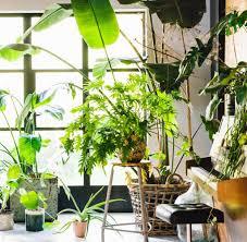 zimmerpflanzen richtig gießen düngen und unbedingt