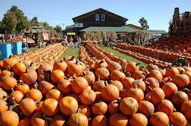 Pumpkin Festival Ohio by America U0027s Best Pumpkin Festivals U2013 Fodors Travel Guide
