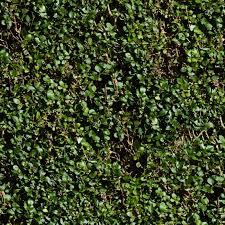 Seamless Green Hedge Texture