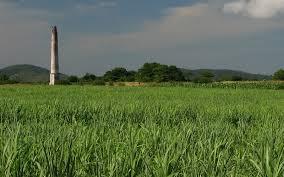 Sugarcane Fields In Cuba Image Credit Lezumbalaberenjena