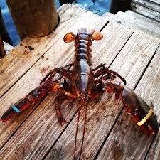 Wharfside Patio Bar Point Pleasant by Red U0027s Lobster Pot