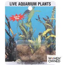 sea plants live aponogeton aquarium bulbs 1ct walmart