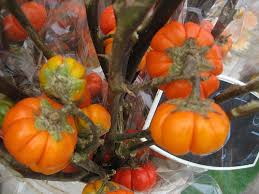 Types Of Pumpkins Grown In Uganda by Know Your Eggplants