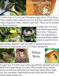 Wild Birds Unlimited: Common Backyard Bird Nest Identification Wild Birds Unlimited Common Backyard Bird Nest Idenfication Sounds Articles Old Farmers Almanac Whibreasted Nuthatch Sitta Carolinensis Birds Certhioidea Best 25 Birds Ideas On Pinterest Pretty Blue A Brown Headed Cowbird At Thicksons Woods Debunk 12 Myths About Feeding Cute Rbreasted Nuthatch Winter Of Wisconsin Species Infographic Poster By Diana Sudyka The Worlds Photos And Sviceberry Flickr Hive Mind Grow These Native Plants So Your Can Feast Audubon What I Find In My Ontario Canada Youtube