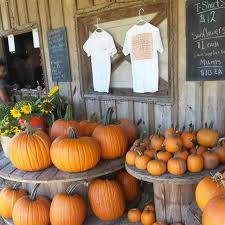 Pumpkin Farms In Georgia by The Top 5 Pumpkin Patches In Tallahassee You Need To Visit This