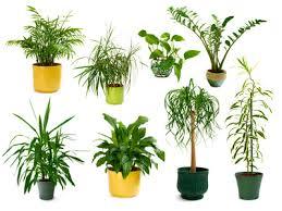biopflanzen bestellen bzw kaufen und bio dünger