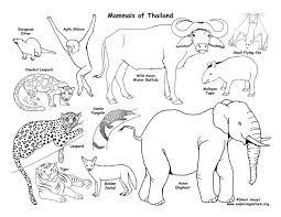 Habitats Animals And Activities