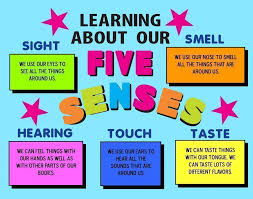 Learning About Our Five Senses