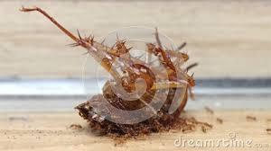 ameisen in der küche stock störung antenne
