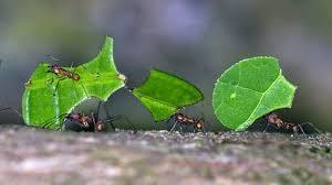 ameisen wie sie die lästigen insekten loswerden mdr de