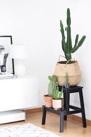 diese 5 zimmerpflanzen verwandeln deine wohnung in eine