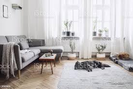 designinterieur aus wohnzimmer mit kleinen designtisch und sofa weiße wände pflanzen auf der fensterbank und boden braune holzparkett die hunde