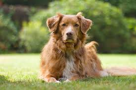 Low Shed Dog Breeds Large by 35 Best Medium Sized Dog Breeds List Of Popular Cute Medium