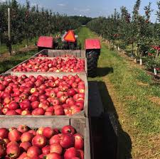Pumpkin Picking Farms In Lancaster Pa by Cherry Hill Orchards Home Facebook