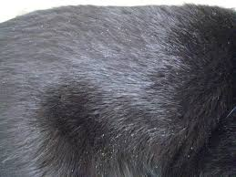 my cat has dandruff easy e sunday the island cats every cat wants to be an island cat