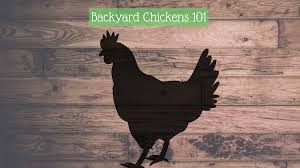 Backyard Chickens – QC Food Hub Backyard Chickens 101 The Moms Guide To San Diego Amazoncom Complete Beginners Lauren Diamant Are Hard Workers In Our Bnyard Every Animal We Raise Renew Pinterest Flock Has A Complex Social Hierarchy With Singular Leader Raising For Dummies Modern Farmer Sister Chicks Club House Backyard Home Cluck Central Cedar Falls Iowa Public Radio 2015 Fact Sheet Chicken Egg 141 Best Images On