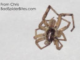 Do Tarantulas Shed Their Fangs by Spider Identification