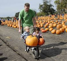 Pumpkin Patch Near Bay Area by The October Pumpkin Patch At Ardenwood Foster Travel Publishing