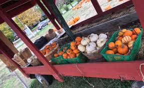 Best Pumpkin Patches In Cincinnati by Kleather U0027s Pumpkin Patch Home Facebook