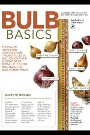 best bulbs to plant in the fall gardens planters and