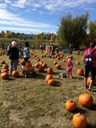 Pumpkin Patch Glendale Co by Pumpkin Patches In And Around Denver 2017 The Denver Ear