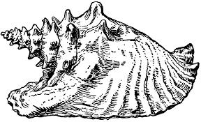 Seashell cliparts 2 · Conch Shell Clipart