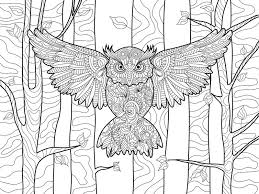 Download Owl In The Forest Coloring Book For Adults Vector Stock