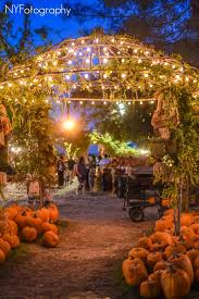 Pumpkin Patches Near Bakersfield Ca by Have You Visited Us At Night Stop By Banducci U0027s Family