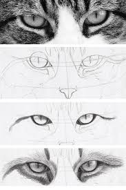 Realistic Drawing Of Cats Eyes In Steps