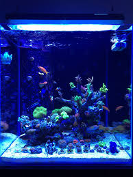 Minimalist Aquascaping | Page 7 | REEF2REEF Saltwater And Reef ... Is This Aquascape Ok Aquarium Advice Forum Community Reefcleaners Rock Aquascaping Contest Live Rocks In Your Saltwater Post Your Modern Aquascape Reef Central Online There A Science To Live Rock Sanctuary 90 Gallon Build Update 9 Youtube Page 3 The Tank Show Skills 16 How Care What Makes Great Large Custom Living Coral Aquariums Nyc