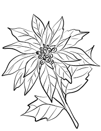Click To See Printable Version Of Poinsettia Flower Coloring Page