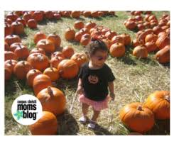 Nearby Pumpkin Patches by What To Do At A Pumpkin Patch