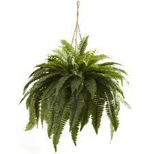 Nordmann Fir Christmas Tree by 29 Inch Silk Indoor Double Giant Boston Fern Hanging Basket 6788