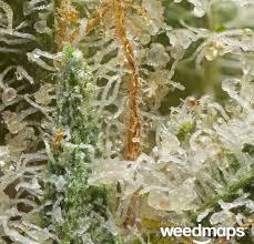 Atomic Northern Lights Marijuana Strain Review
