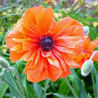 Garden Design Garden Design with Plant Care Guides National