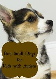 Non Shedding Dog Breeds Kid Friendly by Best Small Dogs For Kids With Autism Autistic Children Therapy