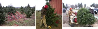 Christmas Tree Shop Syracuse Ny by Woody Acres Christmas Attractions