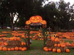 Best Pumpkin Patch Near Roseville Ca by Fall Fun Bishops Pumpkin Patch In Wheatland Ca Pig Races Gem