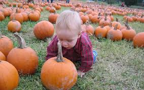 Grapevine Texas Pumpkin Patch by 2016 Plano Area Pumpkin Patches Plano Health And Fitness