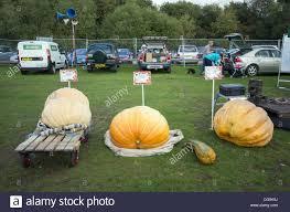Keene Pumpkin Festival by Pumpkin Festival Pumpkins Stock Photos U0026 Pumpkin Festival Pumpkins