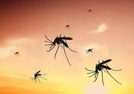 hausmittel gegen mücken natürliche mückenabwehr