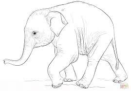 Click The Cute Baby Elephant Coloring Pages