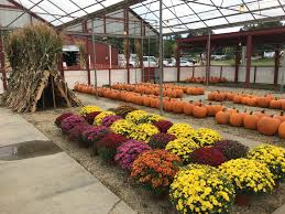 Roger Williams Pumpkin Spectacular 2017 by Family Friendly Outings Archives Masshole Mommy